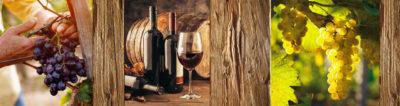 Foire aux vins 3